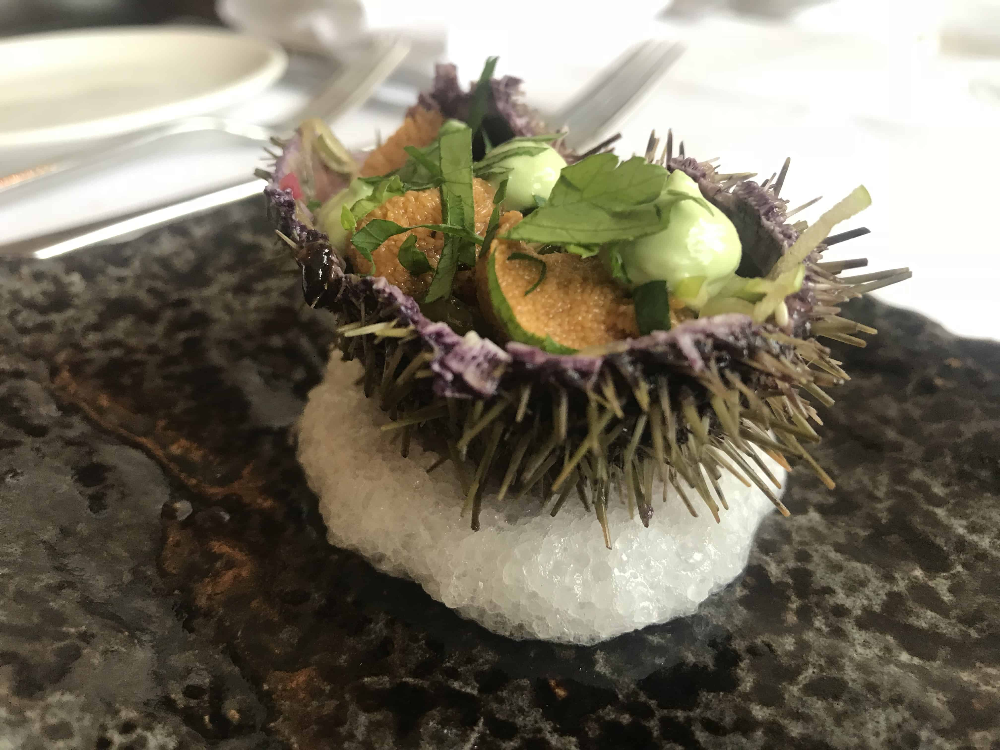 sustainable sea urchin